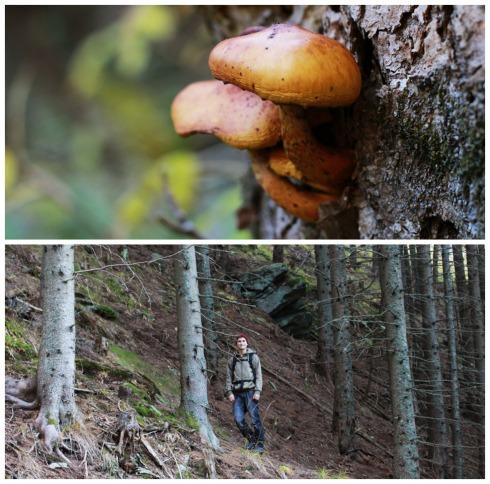 Mariensee_mushroom_search